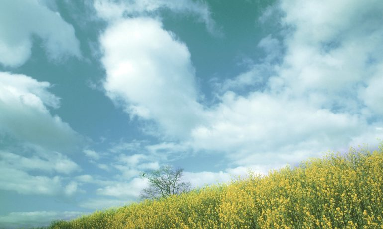REA response to England Peat Action Plan