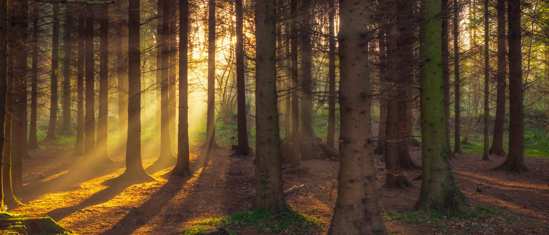 forest morning sun rising in the UK