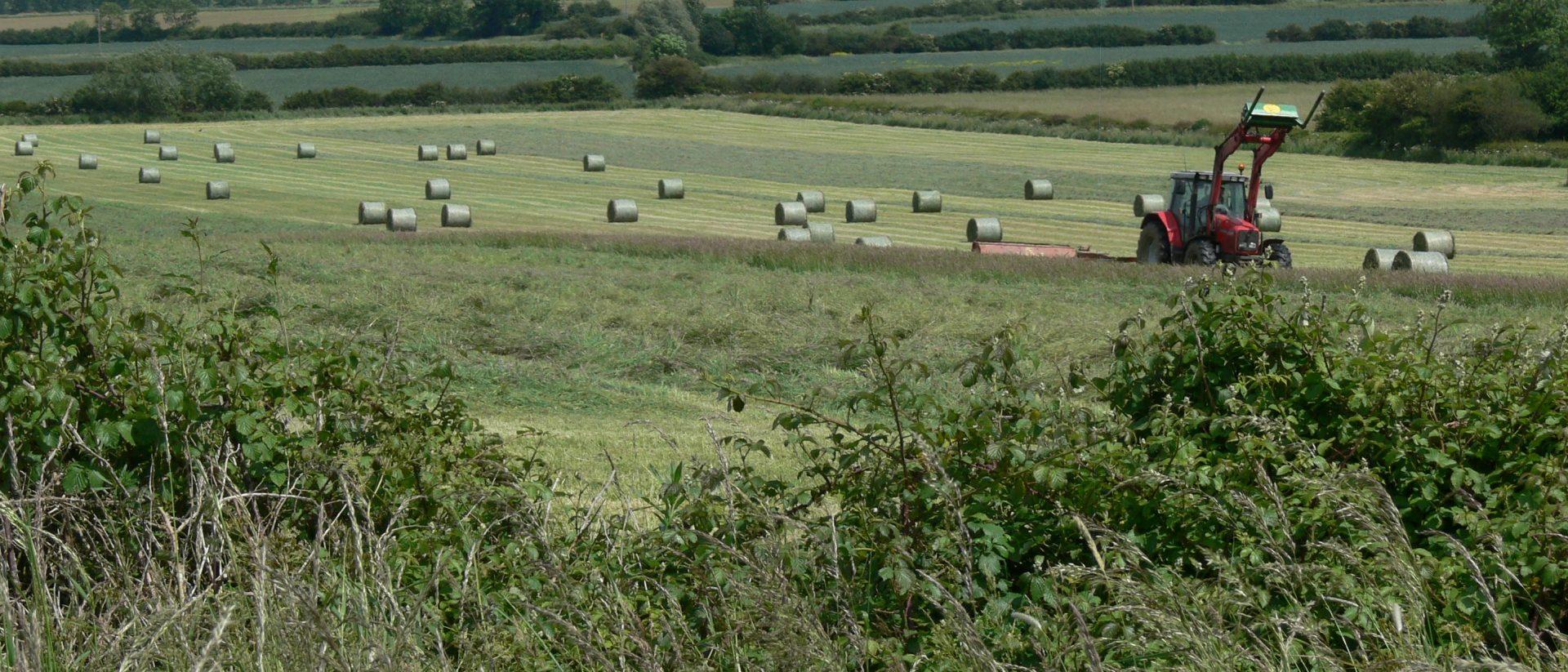 sustainable farming stock